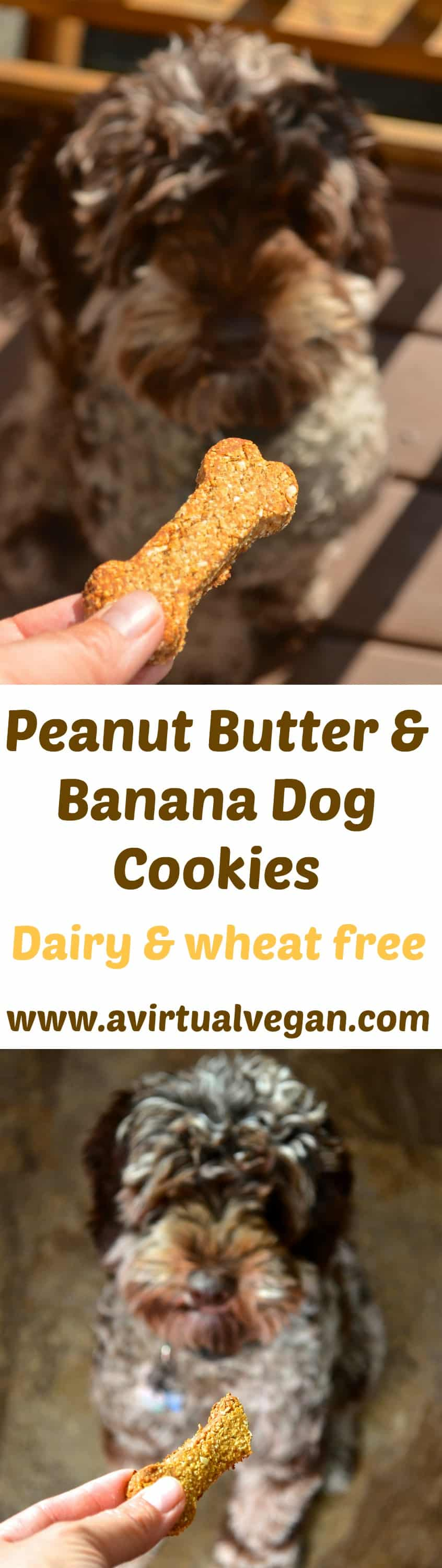 Get some tails wagging with these healthy 3 ingredient dog cookies. Full of peanut buttery goodness and officially taste tested & approved by Chester! #dogcookies #vegan #vegandogcookies #vegandogtreats #dogtreats #dog