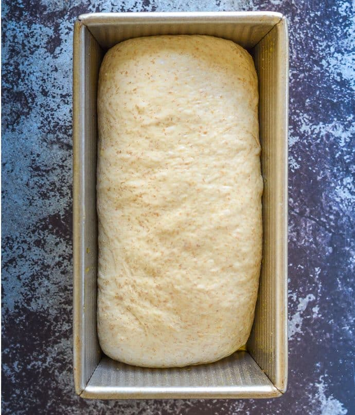 whole wheat bread dough shaped and in a loaf pan prior to proofing