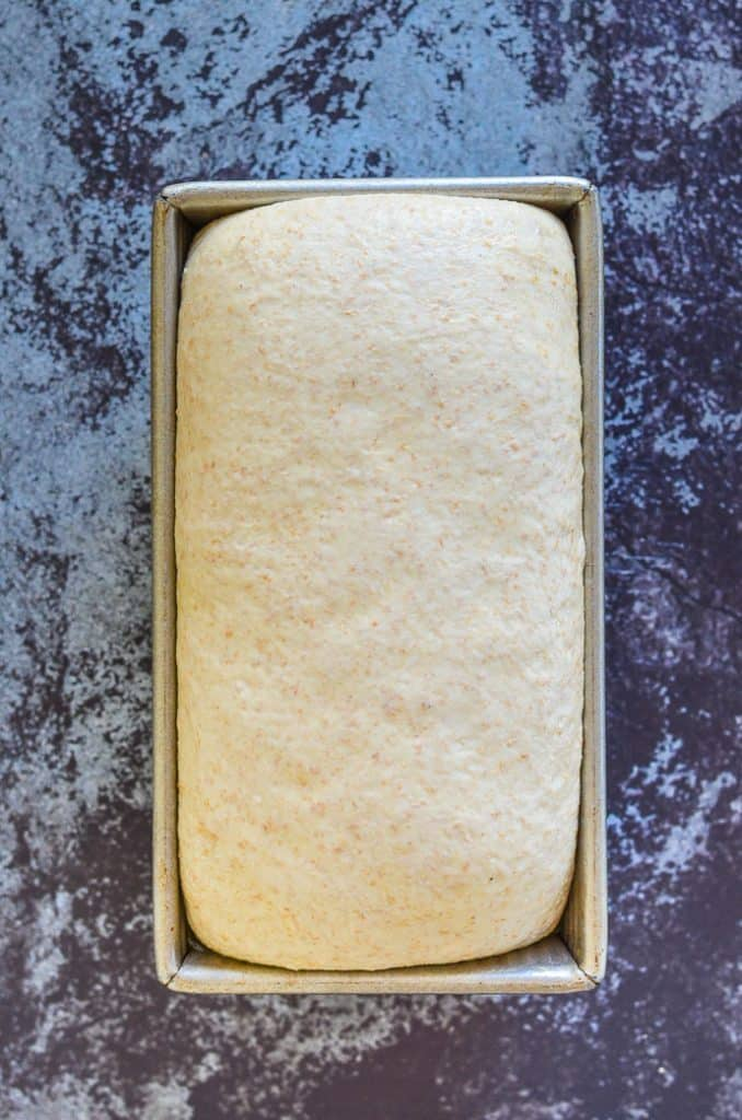 whole wheat bread dough after proofing and before baking