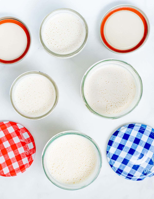 jars of vegan yogurt before culturing